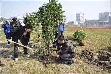 大家热情参与植树节活动
